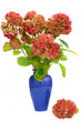 Hydrangea in vase arrangement isolated on white background