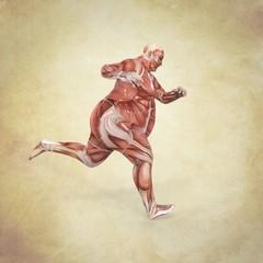 Anatomia Humano Obeso Corriendo
