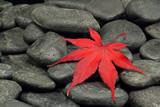 Fototapeta jesień - spokojny - Roślinne