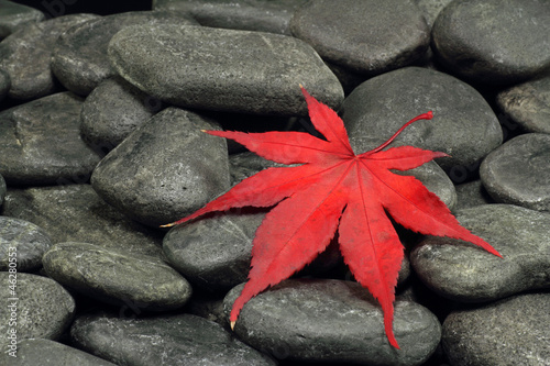 Fototapeten,blatt,backstein,herbst,autumn leaf