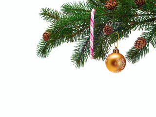 Christmas ball on green spruce branch.
