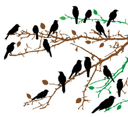 vector birds on branches