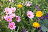 wildblumenwiese mit schmuckkörbchen