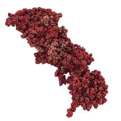 BRCA2 (breast cancer susceptibility gene 2) tumor suppressor pro