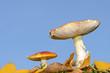 2 Pilze