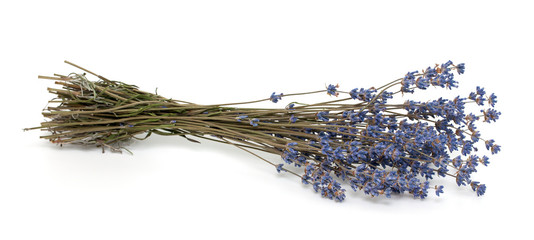 dried lavender isolated  on white background