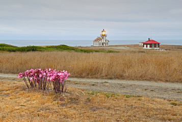Point Cabrillo lighthouse and Amaryllis on a cloudy day