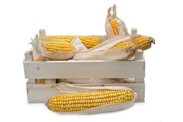 Cajón con mazorcas de maíz secas sobre fondo blanco