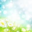 Chamomile Flower Field
