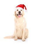 A studio shot of a dog wearing a christmas hat