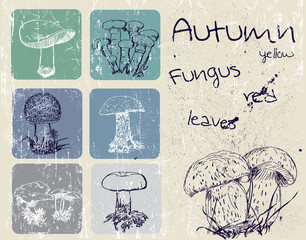 Vintage poster with autumn plants and fungus.