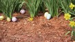 Hand painted Easter eggs scattered among daffodils