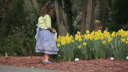 Young mixed race girl finding Easter eggs among daffodils and placing in basket