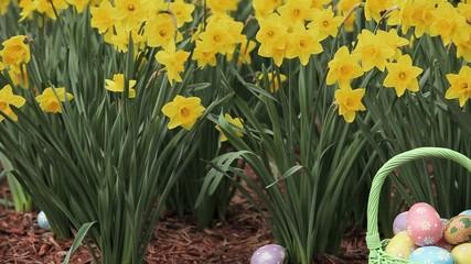 Basket of hand painted Easter eggs among daffodils