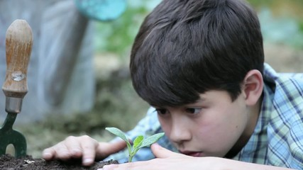 Young mixed race boy planting and touching seedling in garden
