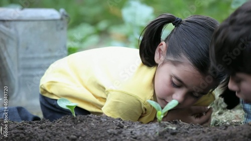 Young boy and girl watching and touching seedling in garden