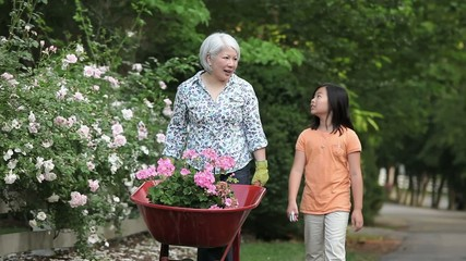 Asian grandmother and granddaughter talking and pushing wheelbarrow of flowers along rose covered fence in garden
