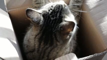 Cat peering from cardboard box