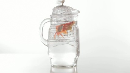 Goldfish swimming in pitcher
