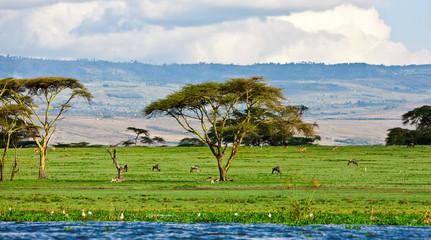 Beautiful African landscape, Lake Naivasha, Kenya