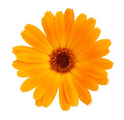 Decorative daisy bright orange color
