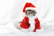 Christmas kitten in Santa stocking hat