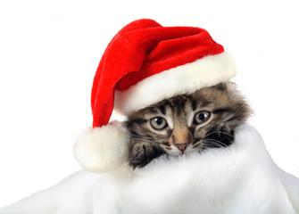 Christmas kitten in Santa stocking hat