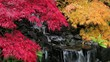 Laced Leaf Maple Trees in Zen Garden in Autumn