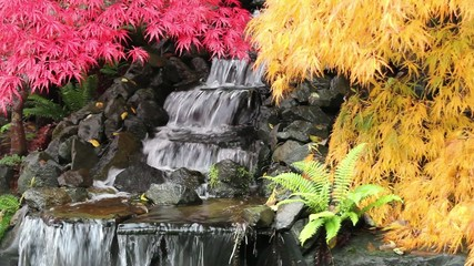 Waterfall in Garden with Laced Maple Trees in Fall Season