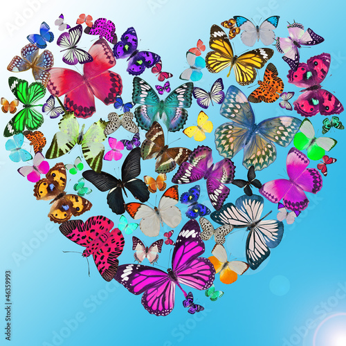 Heart of the butterflies