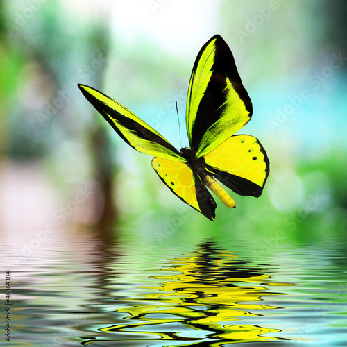 Keuken foto achterwand Vlinder Butterfly 15