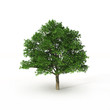 green tree on white