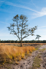 Solitary trees in a Dutch nature reserve in autumn