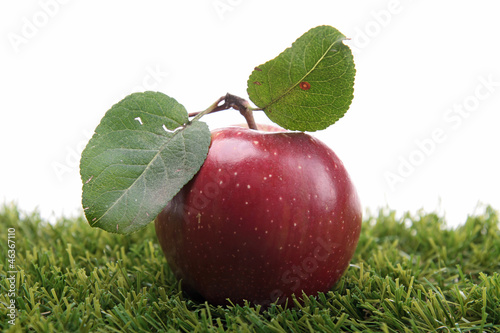 red apple on green herb