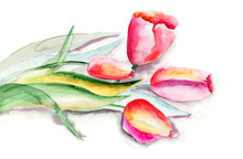 Stylizowane kwiaty Tulipany ilustracja
