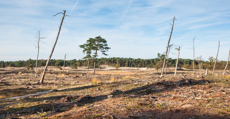 Dying trees in a desolate landscape