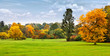 Panorama. Beautiful autumn trees. Autumn.