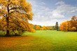 Panorama. Lonely beautiful autumn tree. Autumn.