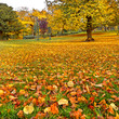 Panorama. Beautiful autumn park. Autumn.