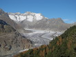 Colorful Larch Forest And Aletsch Glacier