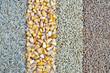 Cereals - oats, corn, barley, wheat