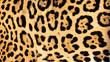 Real Live Jaguar Skin Fur Texture Background