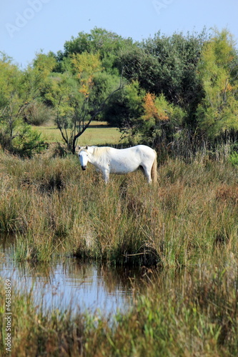Horse in Camargue, France