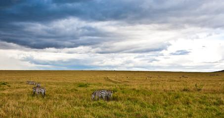 African landscape with storny sky, Maasai Mara, Kenya