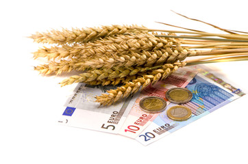 wheat ears and euro money on white