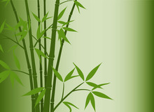 Fond de bambou, vecteur