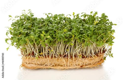 Fresh cress salad isolated on white