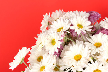 bouquet of daisies on the color background