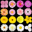 Big Selection Pink, Yellow and White Flowers Isolated