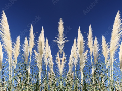 Canne riflesse - Reflected reeds